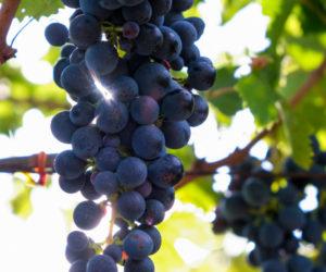 vini abruzzo food and wine italia