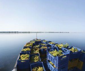 sapore-di-sale food and wine ital;ia