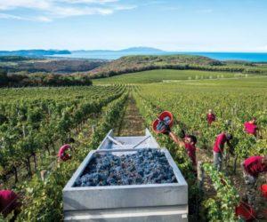 sapore-di-sale food and wine italia